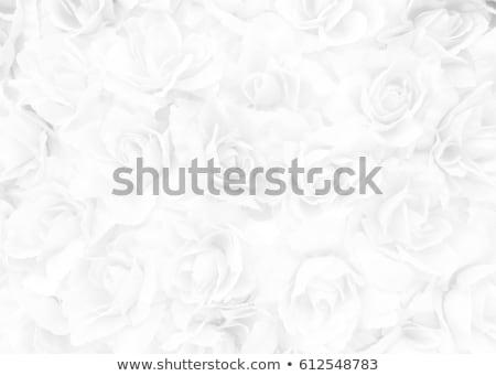 白 バラ 花束 花 愛 自然 ストックフォト © compuinfoto