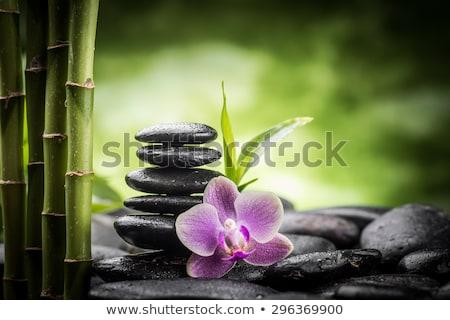макроса · белый · фиолетовый · орхидеи · цветы · изолированный - Сток-фото © neirfy