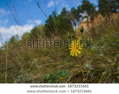 stony post on summer mountain ridge Stock photo © wildman