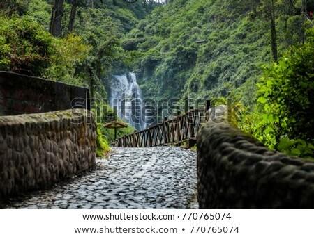 waterval · Ecuador · klif · natuur · rivier · plant - stockfoto © rhamm