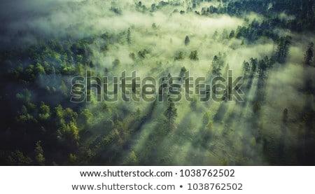 boom · pad · groene · bos · voorjaar - stockfoto © konradbak
