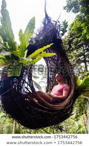 男性 観光 座って 鳥の巣 ツリー ストックフォト © boggy