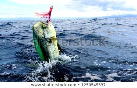 Dorado colorful fish sport saltwater fishing  Stock photo © lunamarina