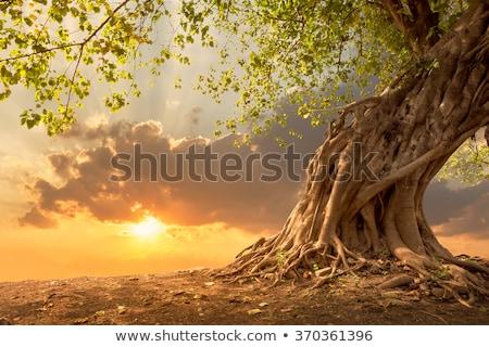 luz · solar · água · estrada · sol · paisagem · laranja - foto stock © nejron