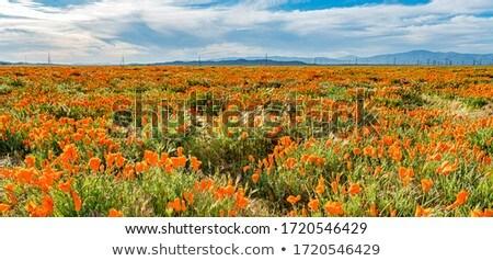 laranja · campo · foco · efeito · primavera - foto stock © homydesign
