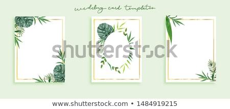 Primavera natureza belo colorido flor verde Foto stock © articular