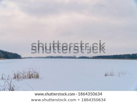 Winter ochtend platteland sneeuw outdoor scène Stockfoto © jeremywhat