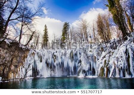Lago espelho floresta árvore primavera grama Foto stock © samsem