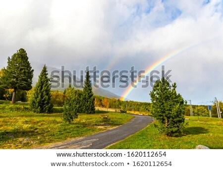 ver · montanha · céu · flor · árvore · natureza - foto stock © orbandomonkos