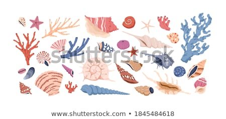 Conch Stock photo © zzve