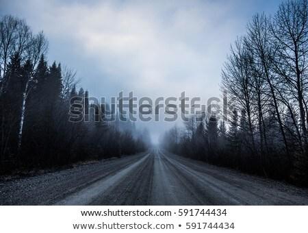 Fekete autó erdő utazás fotózás kint Stock fotó © bmonteny