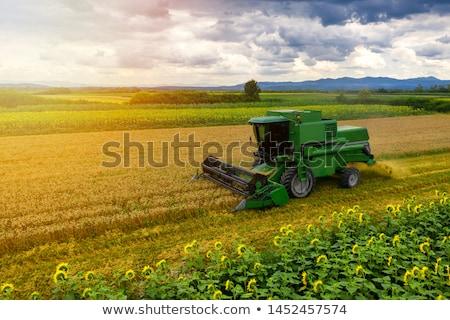 Combine in a field Stock photo © OleksandrO
