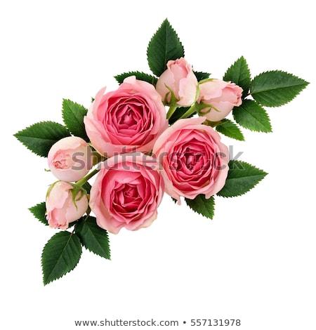 Boeket roze rozen geïsoleerd witte bloem Stockfoto © Lana_M