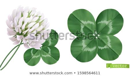 Verde trevo branco isolado ilustração 3d flor Foto stock © ISerg