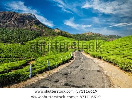 çay Hindistan yeşil çay sabah araba manzara Stok fotoğraf © dmitry_rukhlenko
