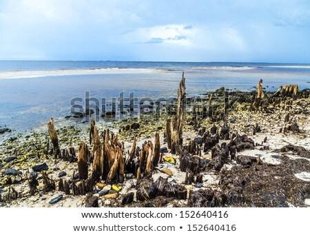 Bizarro velho podre árvores costa céu Foto stock © meinzahn