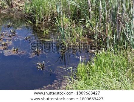 Moor landscape Stock photo © simazoran