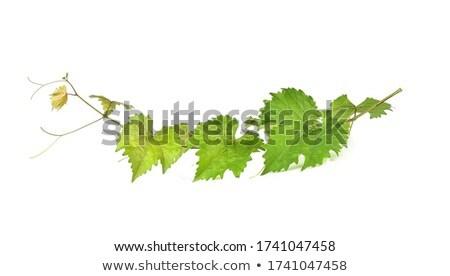 brilhante · vinho · uva · mesa · de · madeira · festa · fruto - foto stock © artjazz