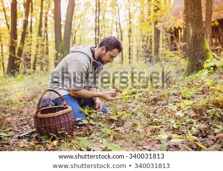 men picking mushrooms in a forest Stock photo © nito