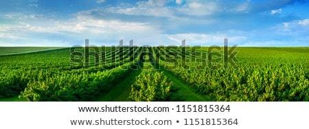 Tarım alan hasat on manzara çiftlik Stok fotoğraf © artlens