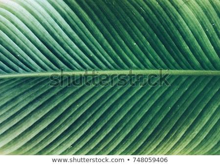 verde · água · superfície · da · água · cópia · espaço · natureza - foto stock © meinzahn