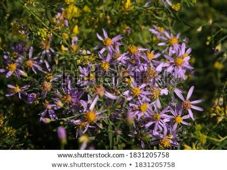 çayır yaz çiçekler parlak mavi gökyüzü gökyüzü Stok fotoğraf © Antonio-S