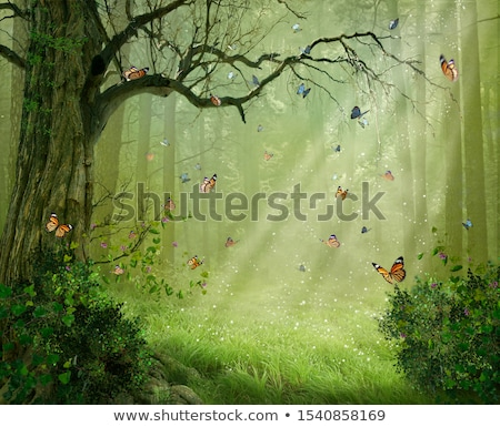forest path with lovely rays of sunlight stock photo © lightpoet