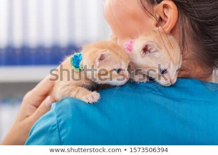 Dois bonitinho gengibre gatinhos veterinário profissional Foto stock © ilona75