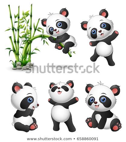 Ayarlamak sevimli panda karikatür vektör Stok fotoğraf © rwgusev
