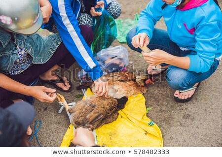 tyúk · grillezett · hús · felszolgált · földimogyoró · mártás · uborka - stock fotó © galitskaya