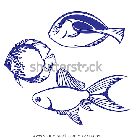 vector collection - four saltwater fishes Stock photo © glorcza