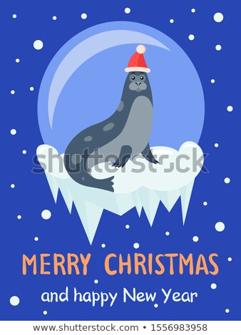 Arctic Card with Seal Animal in Snowball Vector Stock photo © robuart