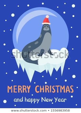 ártico cartão selar animal bola de neve vetor Foto stock © robuart