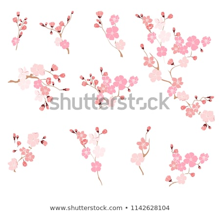 Sakura roze bloesem bloemen bladeren Stockfoto © cosveta