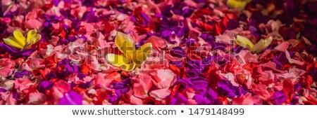 Spa bloemblaadjes kom tropische bloemen pedicure Stockfoto © galitskaya
