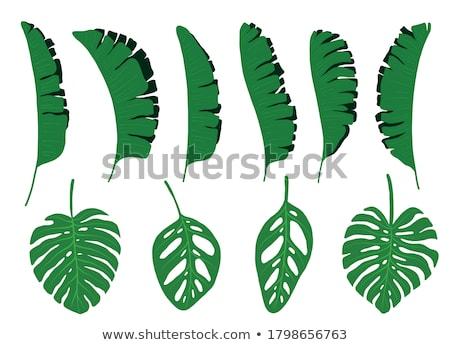groen · blad · cel · structuur · natuurlijke · textuur · macro - stockfoto © craetive