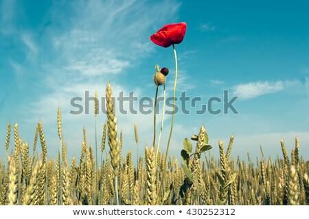 voorjaar · voedsel · gras · natuur - stockfoto © andreykr