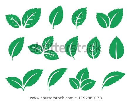 Stock photo: Mint leaves icons