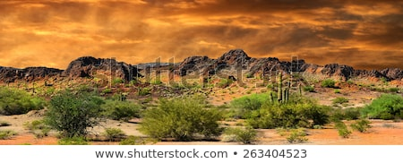 Majestic Desert Sunset Panorama, Albuquerque New Mexico Stock photo © mtilghma