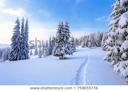 ski trails on snow mountains stock photo © pkirillov