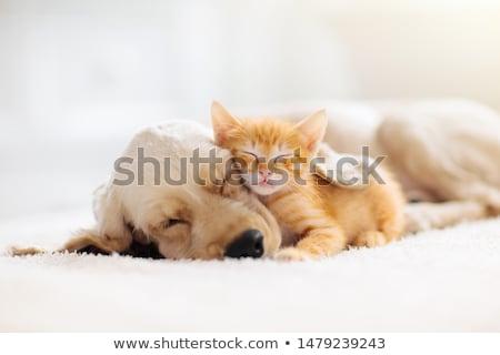Kutya kiscica játszik ágy boldog otthon Stock fotó © photocreo