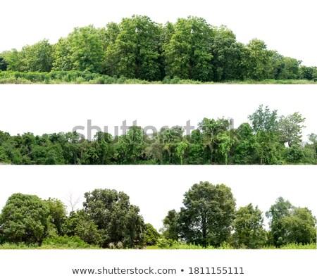 Grup ağaç suluboya kroki soyut arka plan Stok fotoğraf © Galyna