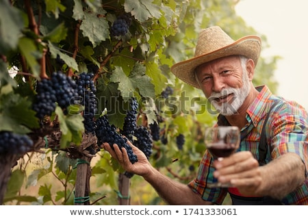 Wine producers in vineyard Stock photo © photography33
