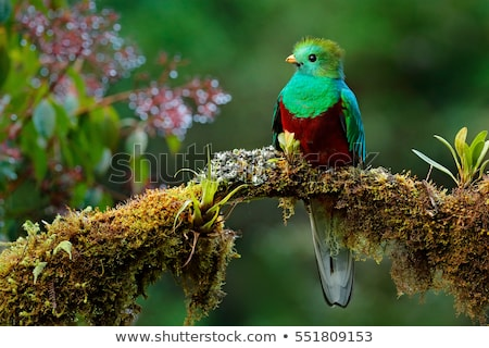 Gyönyörű madár trópusi erdő fa tájkép Stock fotó © dagadu