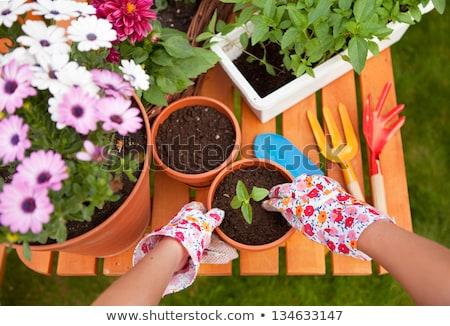verde · planta · escalada · hasta · primavera · campo - foto stock © 2tun