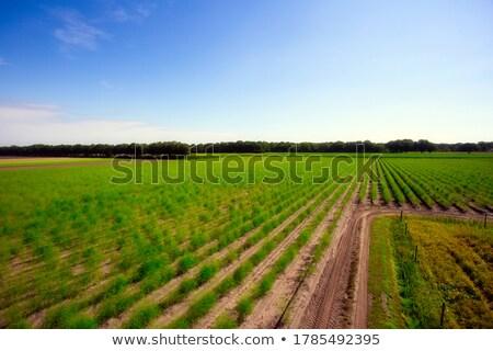 Cultivated countryside Stock photo © hraska