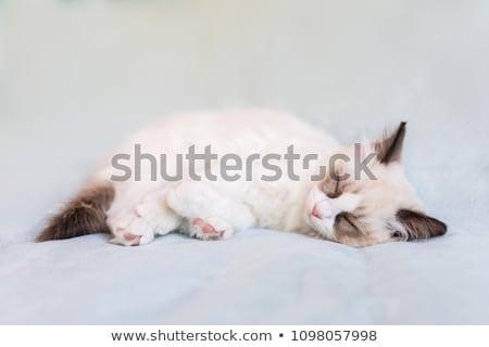 子猫 ソフト 光 愛らしい シール ポーズ ストックフォト © silkenphotography