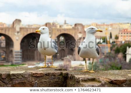 чайка · римской · руин · фото · Постоянный · колонки - Сток-фото © SecretSilent