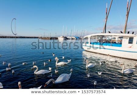 Zwaan mooie witte meer Zwitserland water Stockfoto © zittto