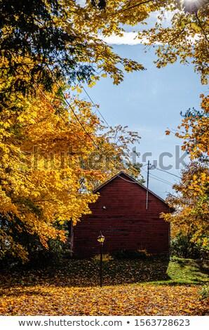 eski · ahır · yeşillik · renkler · sonbahar - stok fotoğraf © Catuncia